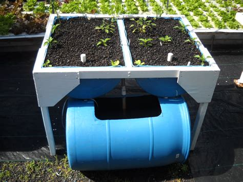 backyard aquaponics system how to become self sufficient using aquaponics gardening