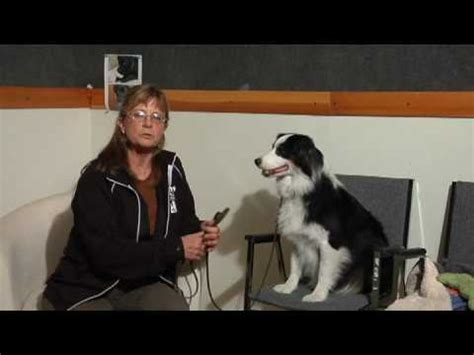 train dog to stay off couch dog care training how to train dogs to stay off
