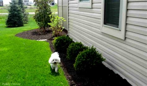 how to landscape a backyard on a budget how to create diy landscaping ideas on a budget for