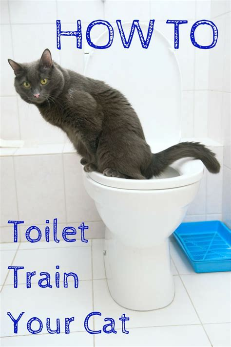 cat using bathroom outside litter box 17 best images about animals and pets on pinterest rare