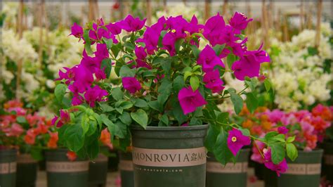 plant lovers 11 things monrovia plant lovers should know grow