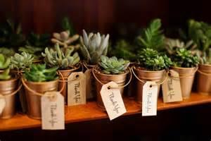 succulent wedding favors succulent plants as favors wedding ideas