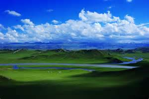 Flowers In The Grasslands - bayanbulak grassland travel china with me