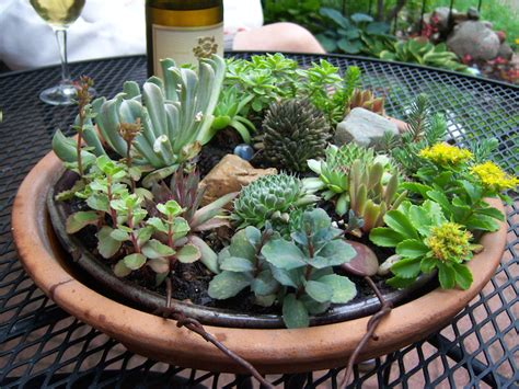 Indoor Succulent Planter by 25 Indoor And Outdoor Succulent Gardens Of All Sizes
