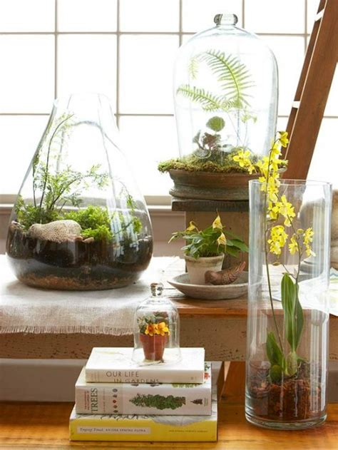 best plants for terrariums going home to roost
