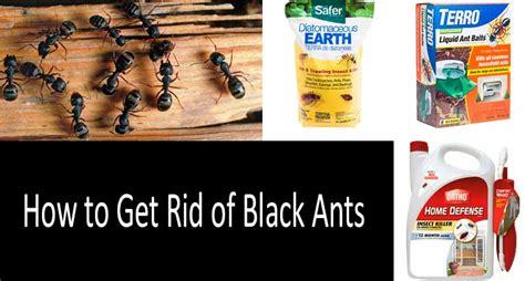 how to get rid of ants in bedroom get rid of ants in bedroom www redglobalmx org