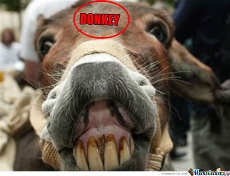 Donkey Meme - donkey by averagebrit meme center