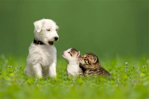 kittens puppies 15 puppies and kittens that will inspire you to play