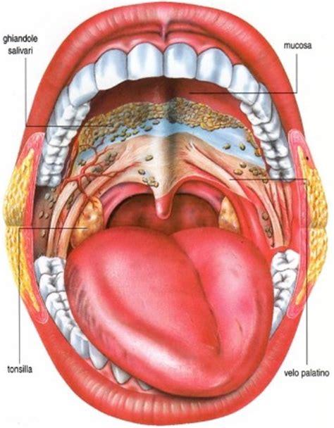 interno bocca tumore cavo orale sintomi fattori di rischio
