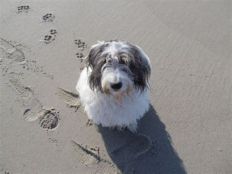 things to when getting a puppy 5 things to consider when getting a