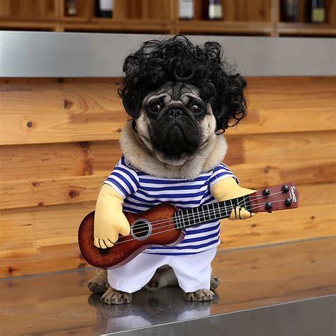 E Para Adocao From The Adoptable Pets Photo Pool by Compra Pug Perro Ropa Al Por Mayor De China