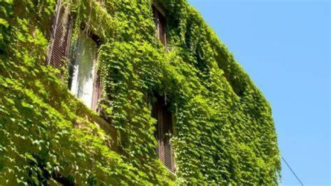 giardini verticali costi pareti vegetali fai da te