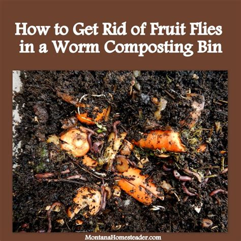 how to get rid of fruit flies in a worm compost bin montana homesteader