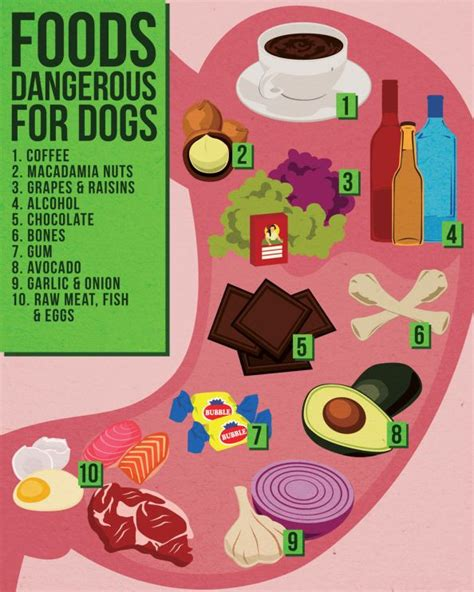 are dogs allergic to grapes things you should about food wishforpets