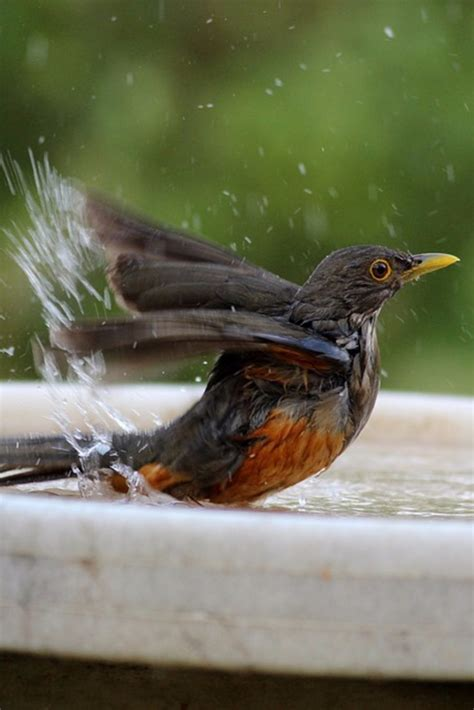 Birds In Your Backyard by Backyard Bird Bath Tips Do You Need A Bird Bath In Your