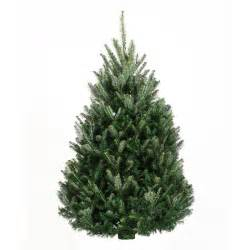 fraser fir trees trees products