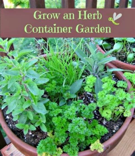 container herb gardening how to grow an herb container garden gardens herbs and