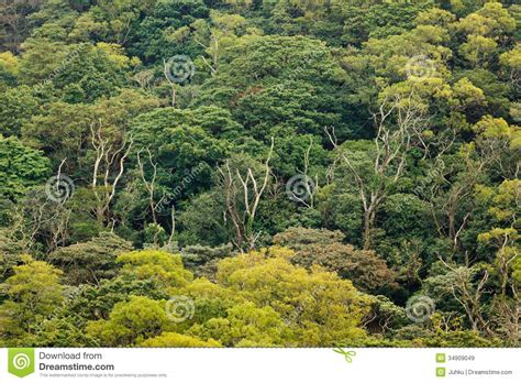 view of forest habitat royalty free stock photograph in aerial view of rainforest canopy royalty free stock images