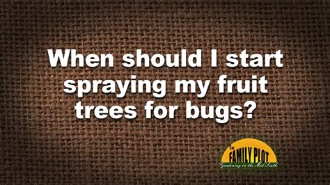 when should you spray fruit trees q a when should i start spraying my fruit trees