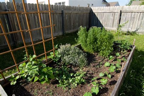 how to grow vegetables in a small garden how to grow vegetables in a small space global garden