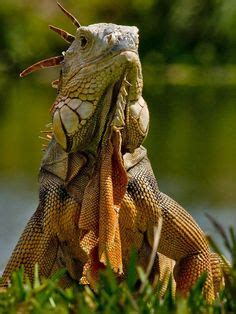 Novel The Most Dangerous In The World 7 of the world s most dangerous lizards and turtles