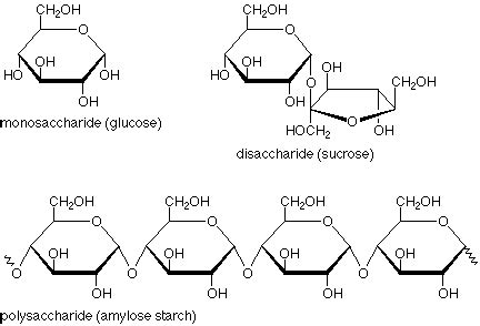 diagram of a polysaccharide what are polysaccharides