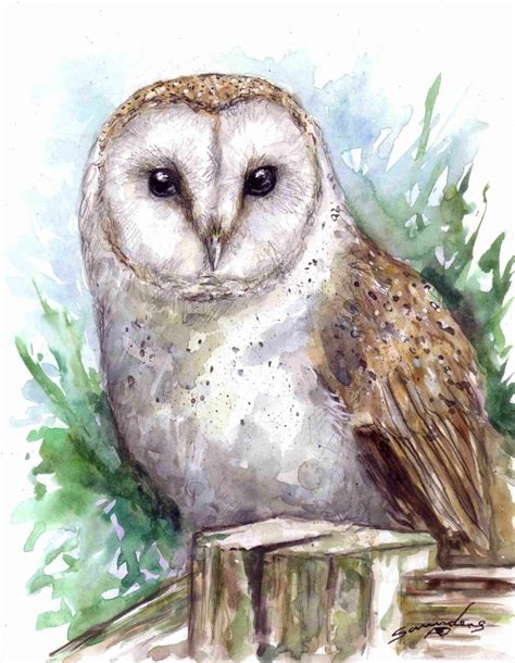Owl Time by Barn Owl Time Lapse Watercolour