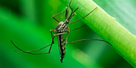 how to rid backyard of mosquitoes 12 mosquito havens lurking in your yard