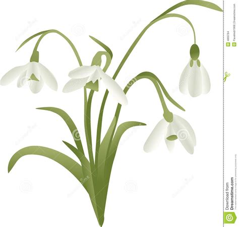 lily of the valley stock images image 4869784