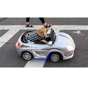 Pimpin Pomeranian Driving Car Through San Diego  YouTube
