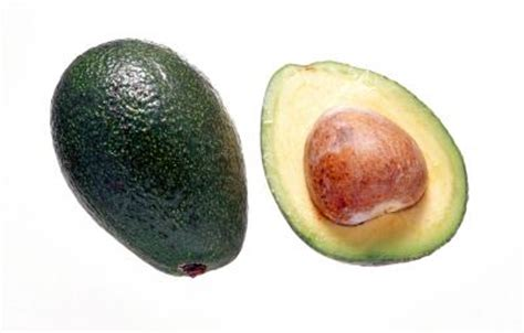 how long does it take to outgrow a bob how long does it take an avocado pit plant to grow home