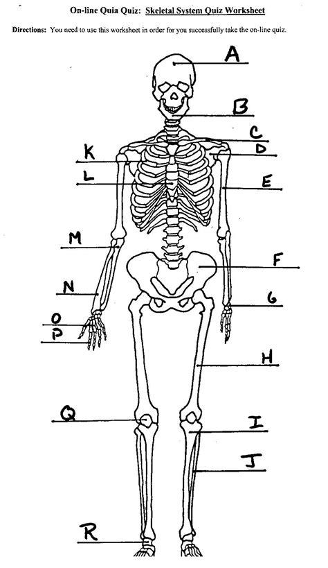 skeletal system diagram worksheet worksheets for school