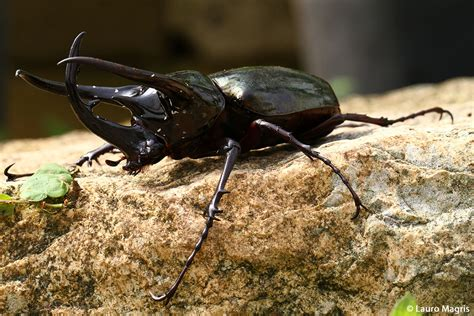 cervo volante insetto macro by elleemme juzaphoto