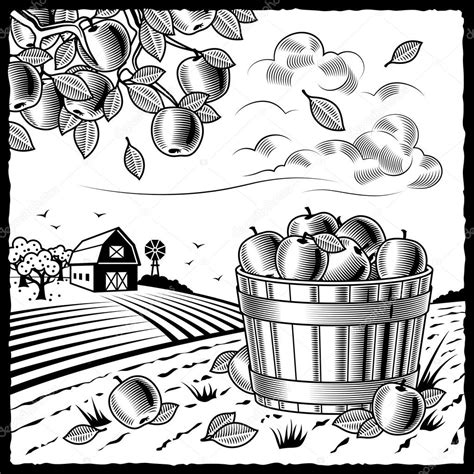 apple harvest coloring pages landscape with apple harvest black and white stock