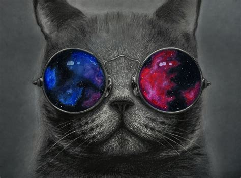 wallpaper cat with sunglasses cat wearing sunglasses wallpaper www pixshark com