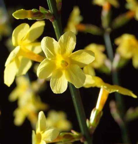 fiore invernale monicolour fiore colorato invernale