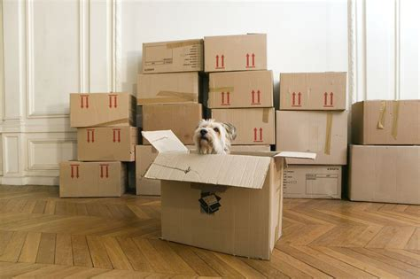moving a dog to a new house ways to help your dog settle into a new home