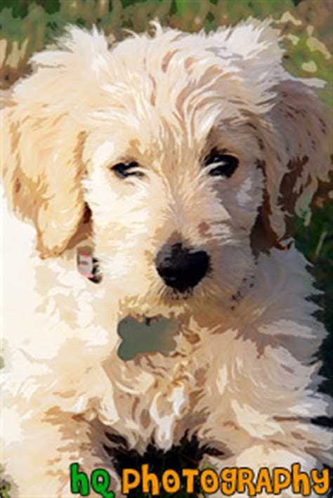 goldendoodle puppy teething goldendoodle painting pictures