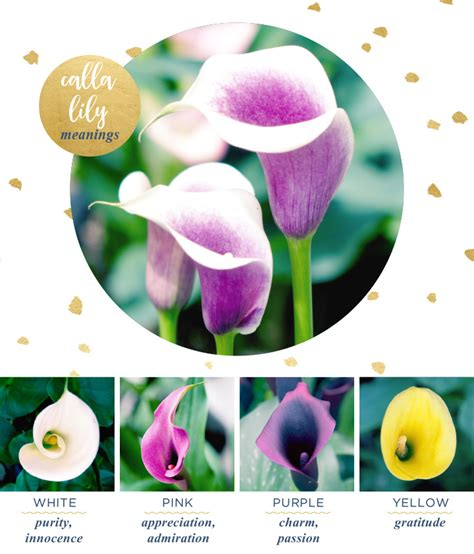calla lily meaning and symbolism ftd flowers coupon 50