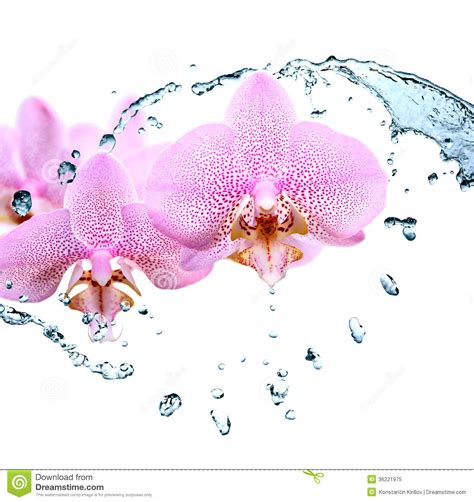 orchid blue water reflection flowers beautiful orchid orchid and water royalty free stock photo image 36221975