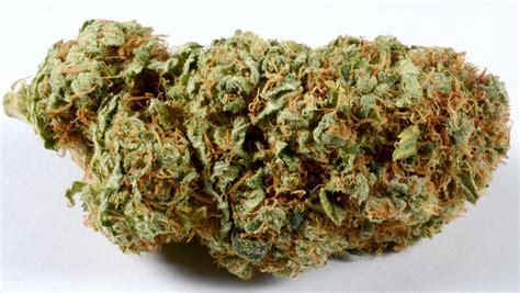 test marijuana test marijuana for thc and cbd content at home zenpype