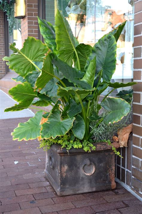 tropical container garden 59 best images about container plants on