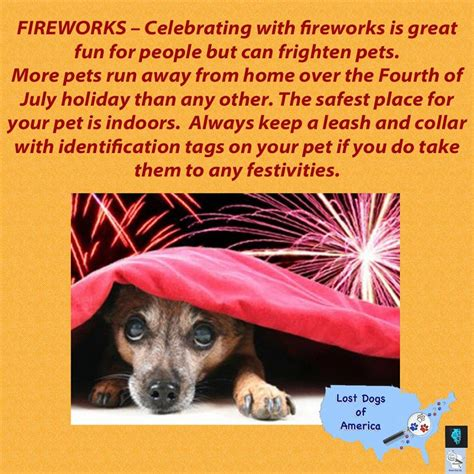 dogs and fireworks fireworks and dogs lost dogs illinois