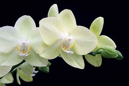 how to take care of indoor orchids home pinterest