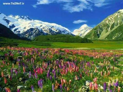 imagenes hermosas relajantes pajarillos cantando hermosas melodias peaceful music