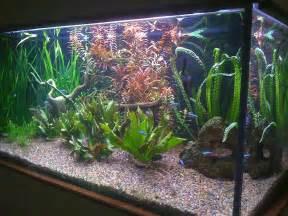 entretien d aquarium eau douce eau de mer autres