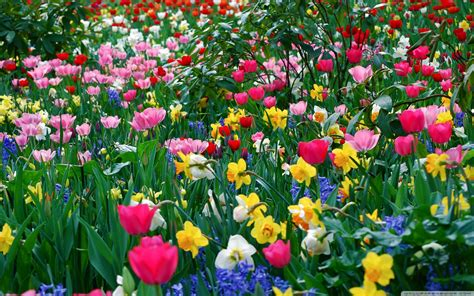 image of spring flowers spring images flowers flowers everywhere hd wallpaper and