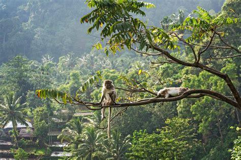 Kaos Sasaku Lombok 3 wisata halal ke lombok j2t dunia