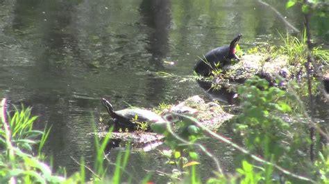 Gartenteich Tiere by Pond