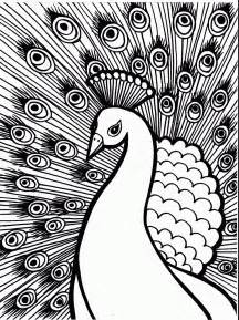 peacock coloring pages for adults coloring now 187 archive 187 bird coloring pages